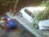 Asalto a una mujer en pleno centro de la ciudad de Chilecito [VIDEO]